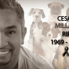 Cesar Millan Is Alive and Well
