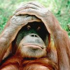 Sandra Orangutan Declared a Person With a Right to Freedom