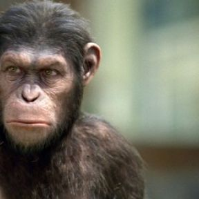 How True Is Planet of the Apes? Human Resilience and Primate Studies