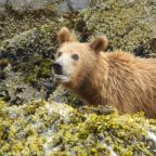 Bears, Fear, and Risk Management