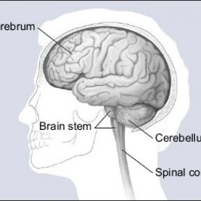 Brain Architecture and Williams Syndrome