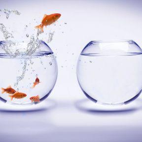 Conflict as a Precursor to Change
