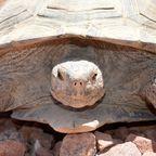 Photo credit: Desert Tortoise Conservation Center