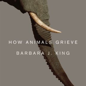 Grief is the Flip Side of Love: How Animals Grieve