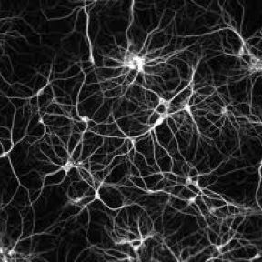 Neuron Overload