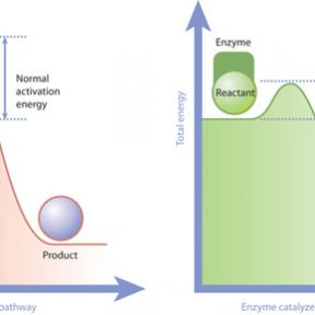 Insights from Chemistry into how 'Nudges' Impact Decisions