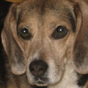 The Hound of Hell: Helping A Dog To Behave
