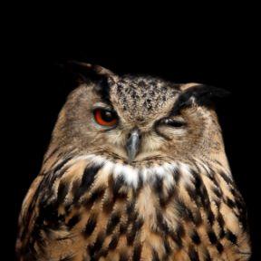 Taming the Night Owl