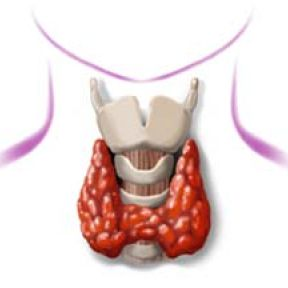 Psychiatric Trouble May Start in the Thyroid, Should We Be Surprised?