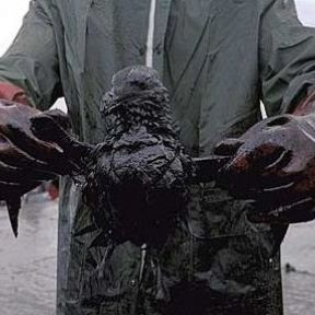 Here's how to wash the Gulf oil from YOUR hands