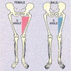 Girls' Knees and Gender Confusion