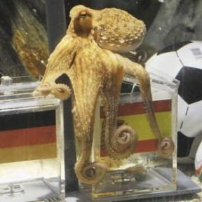 On Paul the Octopus and the Human Penchant for Patterns