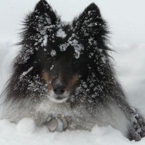 SNOW SNOW SNOW SNOW SNOW!!!
