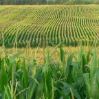Civil Debate on GMOs Is Still Possible For Open Minds