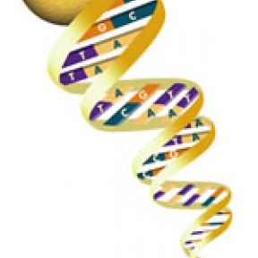 Genes and social networks:  new research links genes to friendship networks
