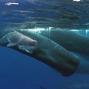 Whales, Whaling, and Humanity