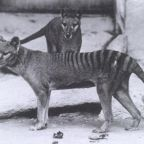 Extinction Folly -- Review of Paper Tiger: A Visual History of the Thylacine