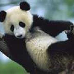 EVIL PANDAS: A Scourge on the Brain