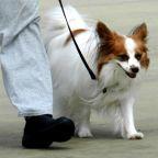 Dog Walking Has Psychological Benefits for You