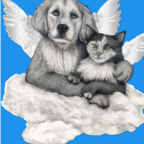 Do Pets Go To Heaven?