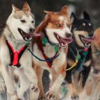 The Morality of Marathon Dog Races