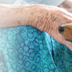 Does Animal-Assisted Therapy Really Work?