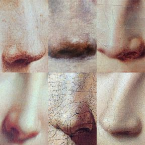 Noses Vary Inside and Out