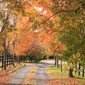 A Harvest of Thanksgiving Novels