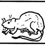 The Rat-Brained Navigation of Men