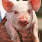 Would You Be Nice to a Chauvinist Pig?