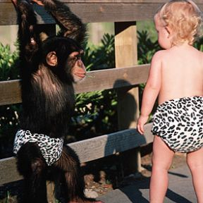 Chimps are like humans? Stop monkeying around