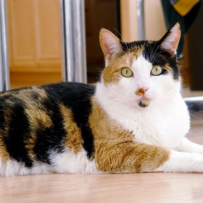 How Women's Brains Are Like Calico Cats
