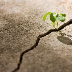 Good Things Are Going to Happen: Adaptation and Healing