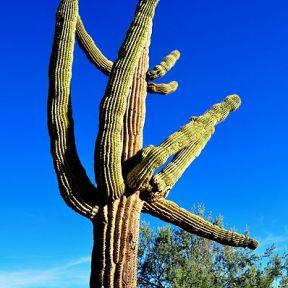 Cactus Mathematics