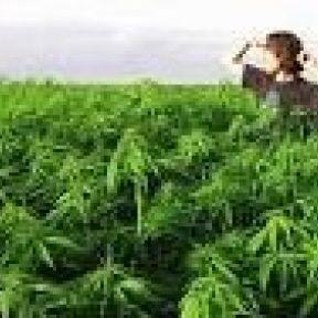 Marijuana Use and Addiction: Update, One Year Later