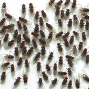 Physical Exercise and Well-Being: Lessons from Fruit Flies