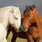 Leading Wild Horses: Why Parents and Schools Must Unite
