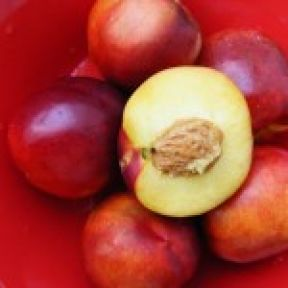 The nectarine and curious peach/into my hands themselves do reach