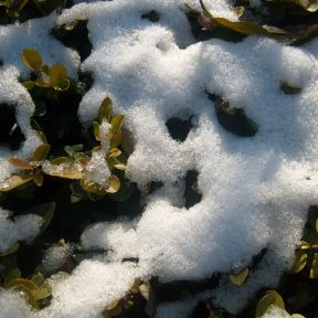 What Can We Learn From Melting Snow and Ugly Grass?