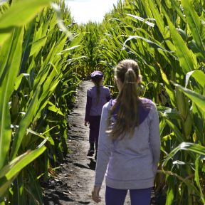 Blazing a Trail in Corn and Life