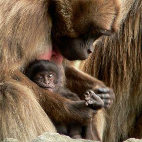 Monkey See, Monkey Smile