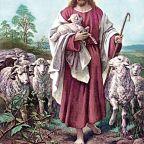Feeling Sheepish?