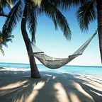 A hammock strung between palm trees.
