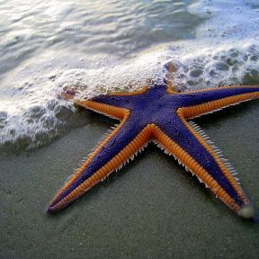 You may be a starfish and not even know it