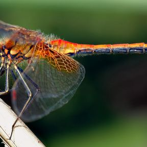 There's More to a Dragon Fly Than Just Good Looks