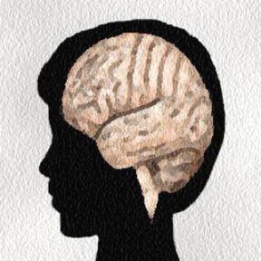 Should Teachers Learn Neuroscience?
