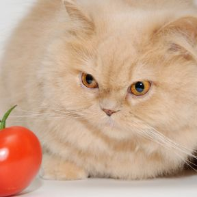 Why Dogs and Humans, But Not Cats, Can Be Vegans