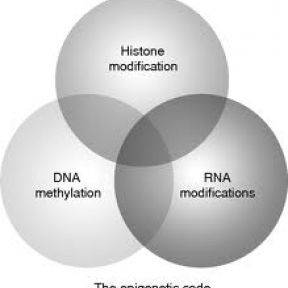 The Influence Of, And On, Epigenetics