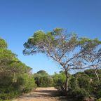 Ibiza landscape. Pxhere. Public domain.