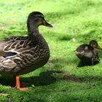 """Ducks"""